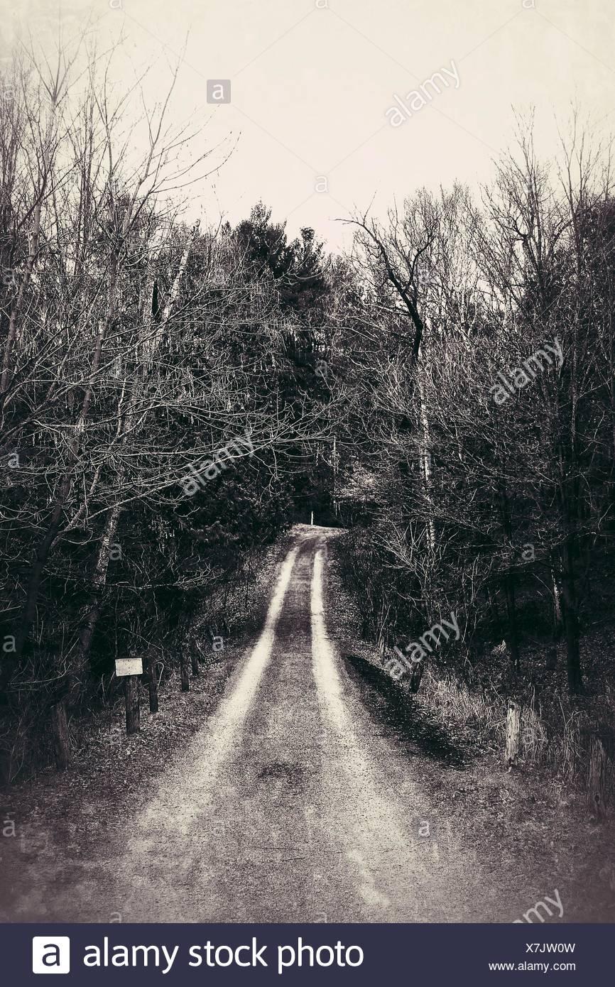 Weg inmitten von Bäumen im Wald Stockbild