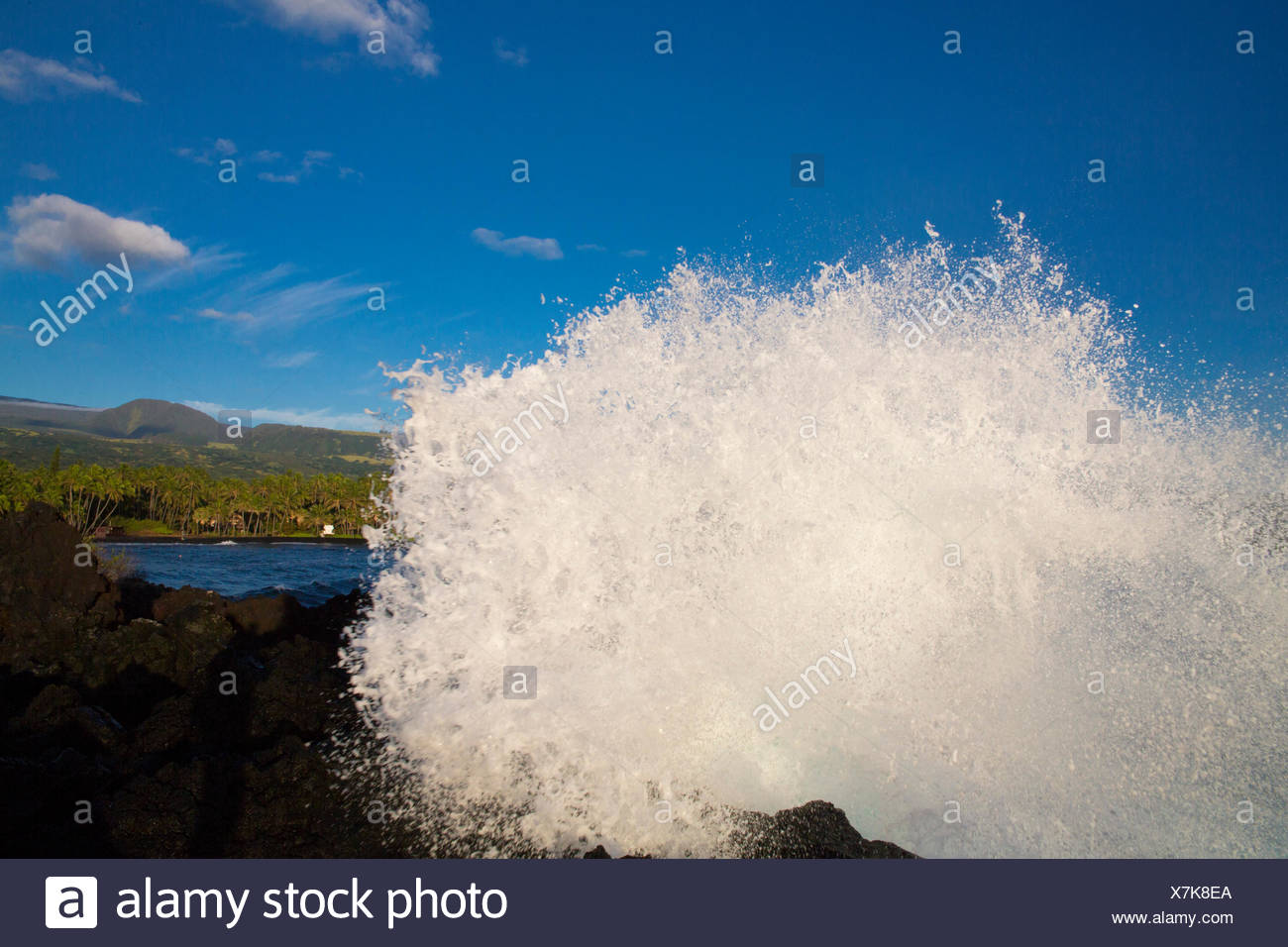 Big Island, Palmen, Punaluu Black sand Beach, Big Island, USA, Hawaii, Amerika, Schaum, Surfen, Stockbild