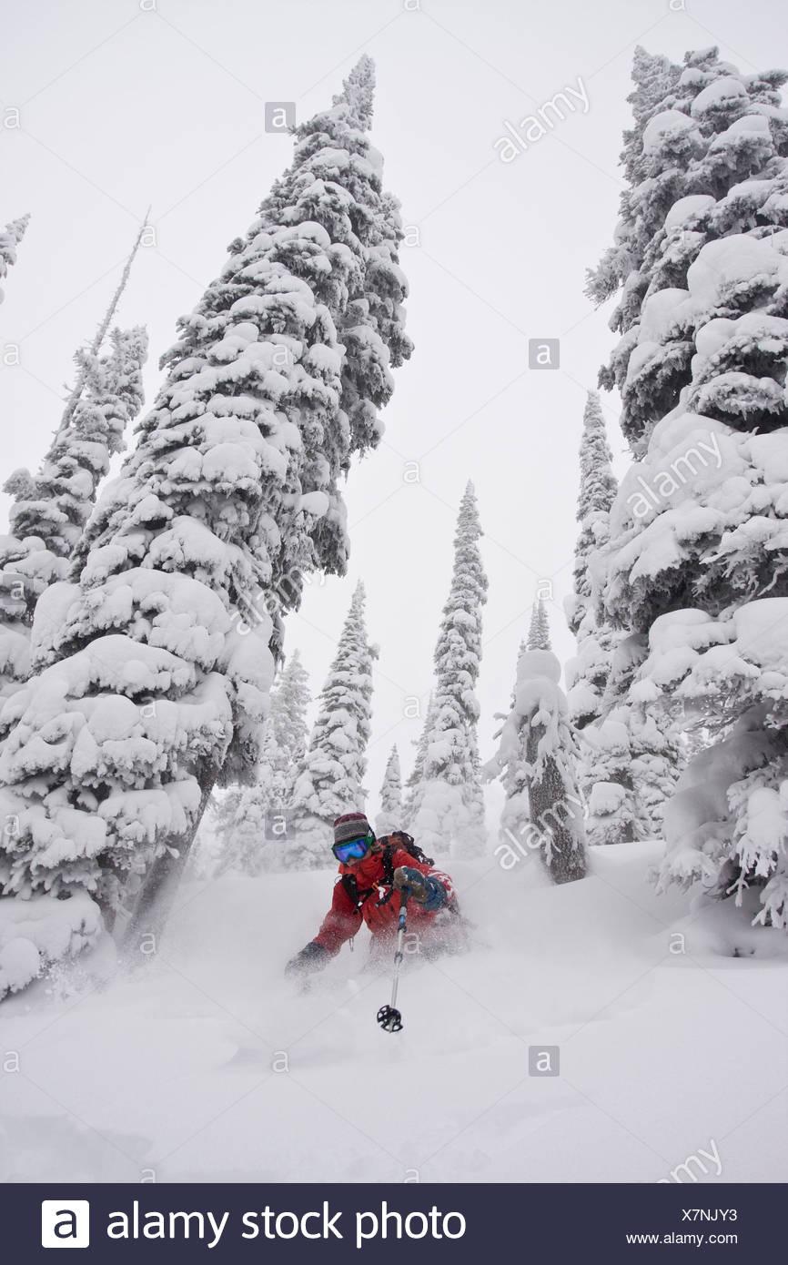 Eine Skifahrerin genießt Neuschnee und große Bäume im Hinterland von Fernie v. Chr Stockbild