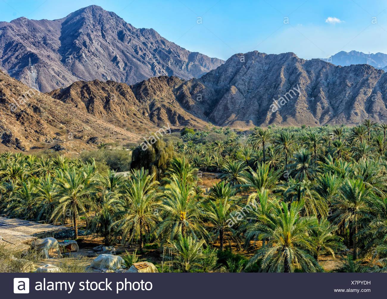 Oase mit Palmen in den Hajar-Gebirge, Fujairah, Vereinigte Arabische Emirate Stockbild