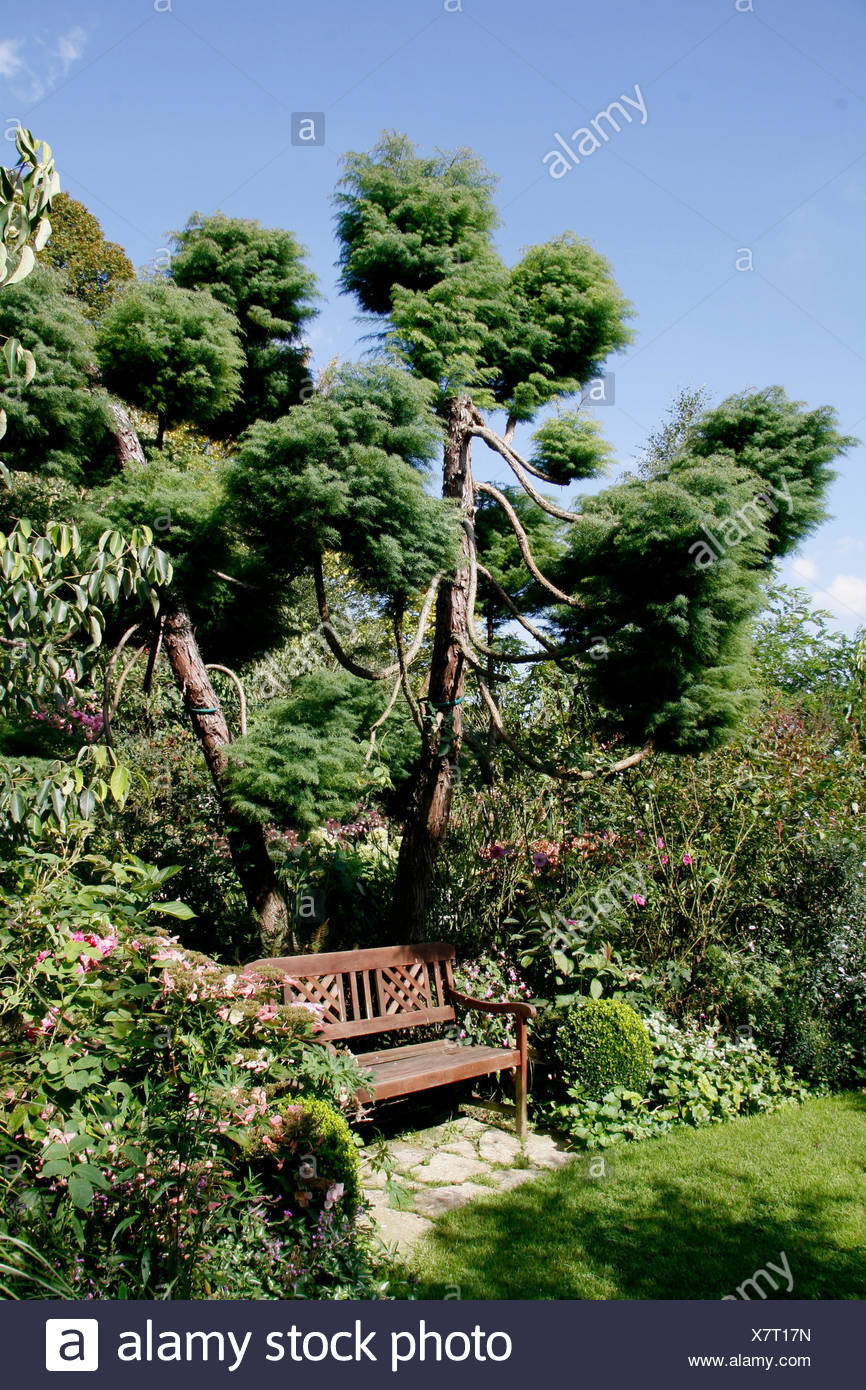 Bank Unter Lollipop Abgeschnitten Nadelbaum Jardin D Angelique