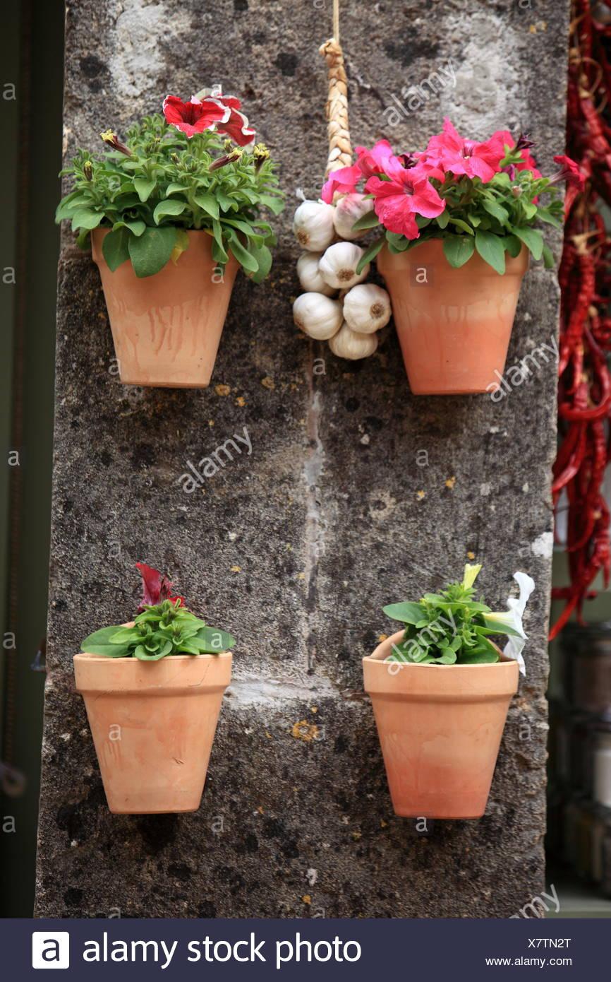 Bluhende Topfpflanzen Stockfotos Bluhende Topfpflanzen Bilder Alamy