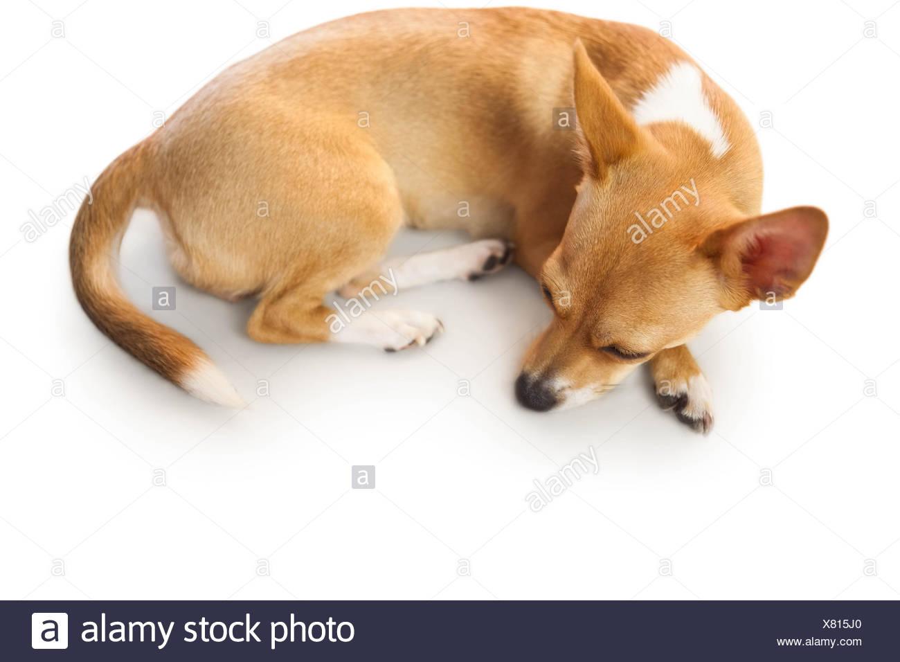 Beste Malvorlagen Von Niedlichen Hunden Fotos - Beispiel Business ...