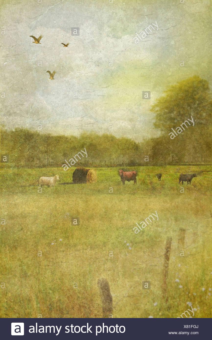 sanfte Country-Szene mit Feldern und Bäumen und einige Nutztiere Stockbild