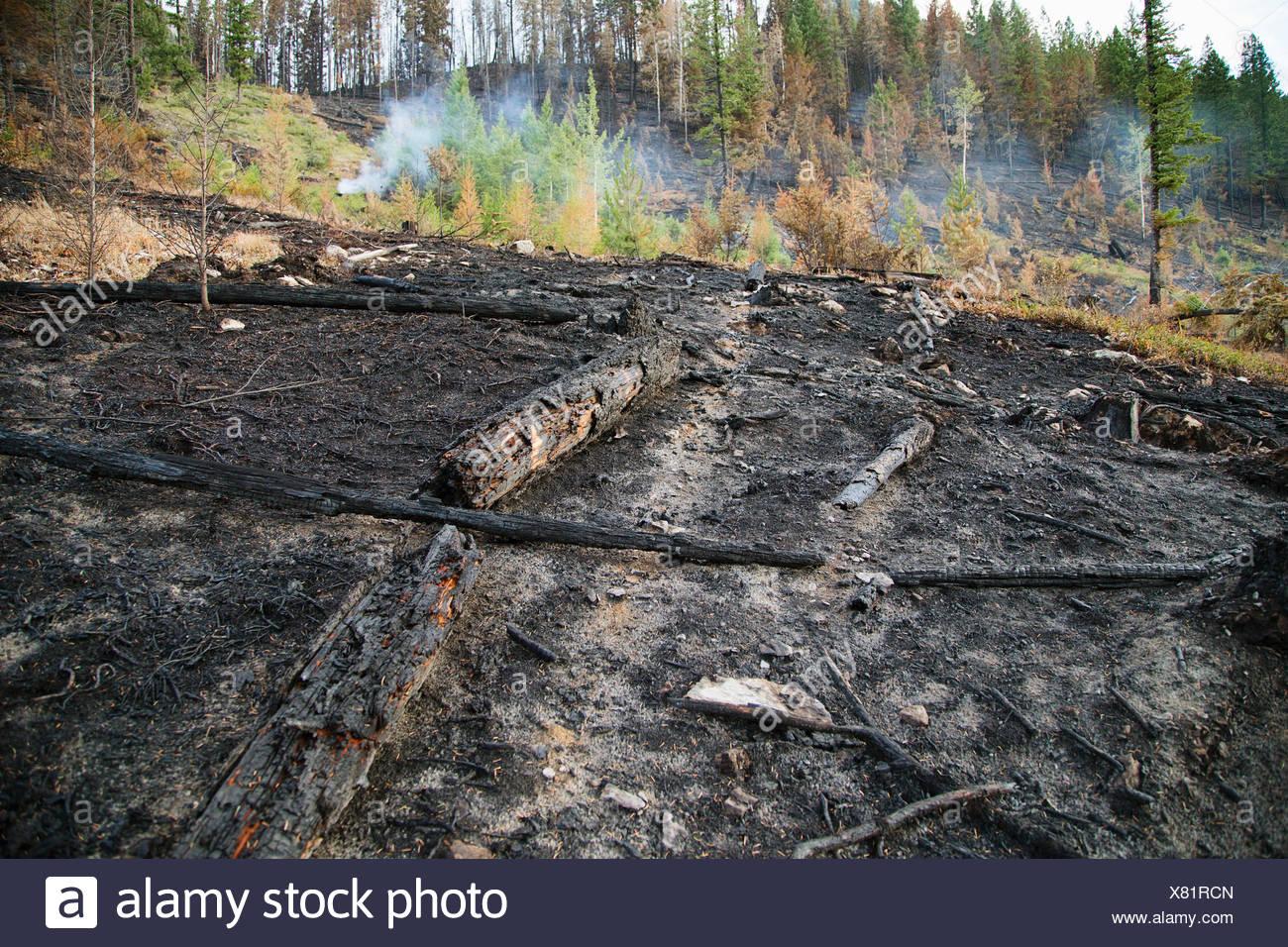 Verbrannten Boden durch Wald Feuer-Schaden Stockbild