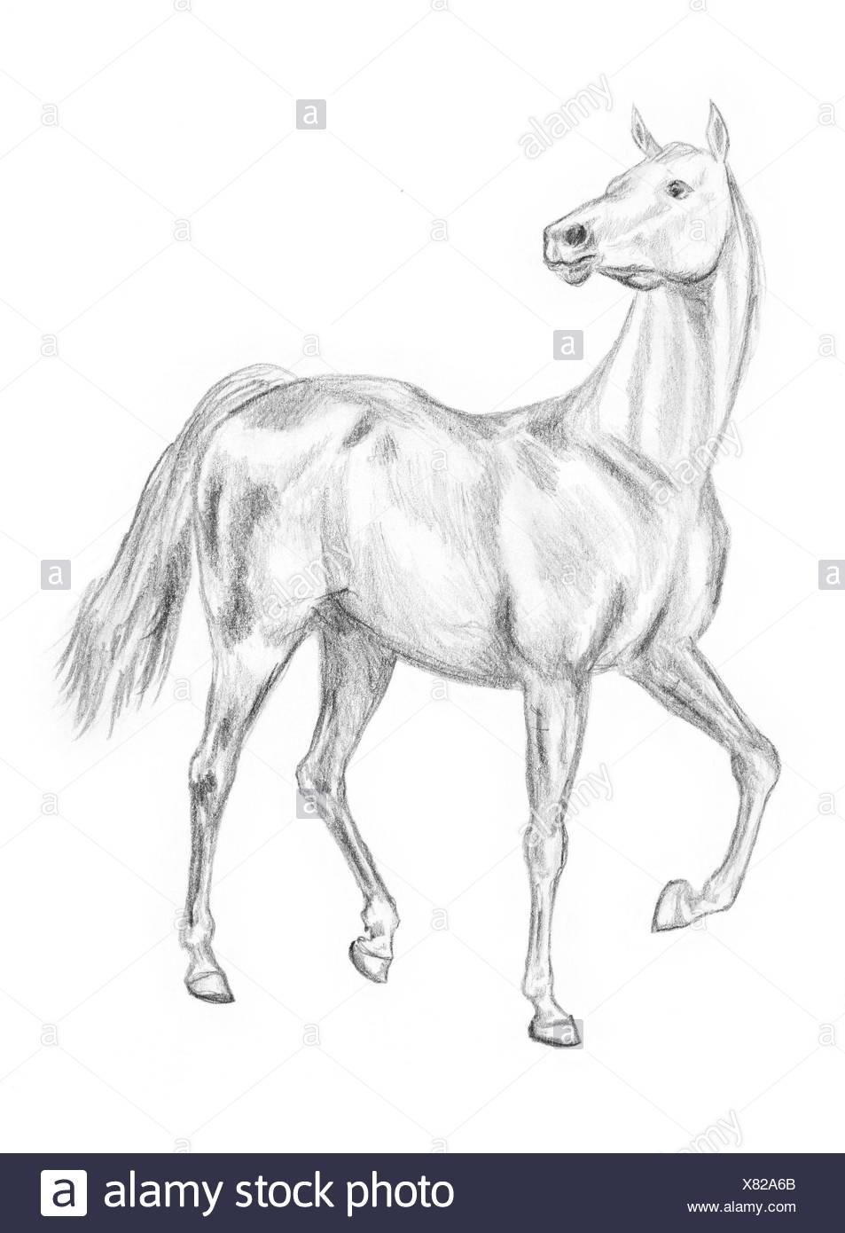 Walking Pferd Zeichnen Stockfoto Bild 280335059 Alamy