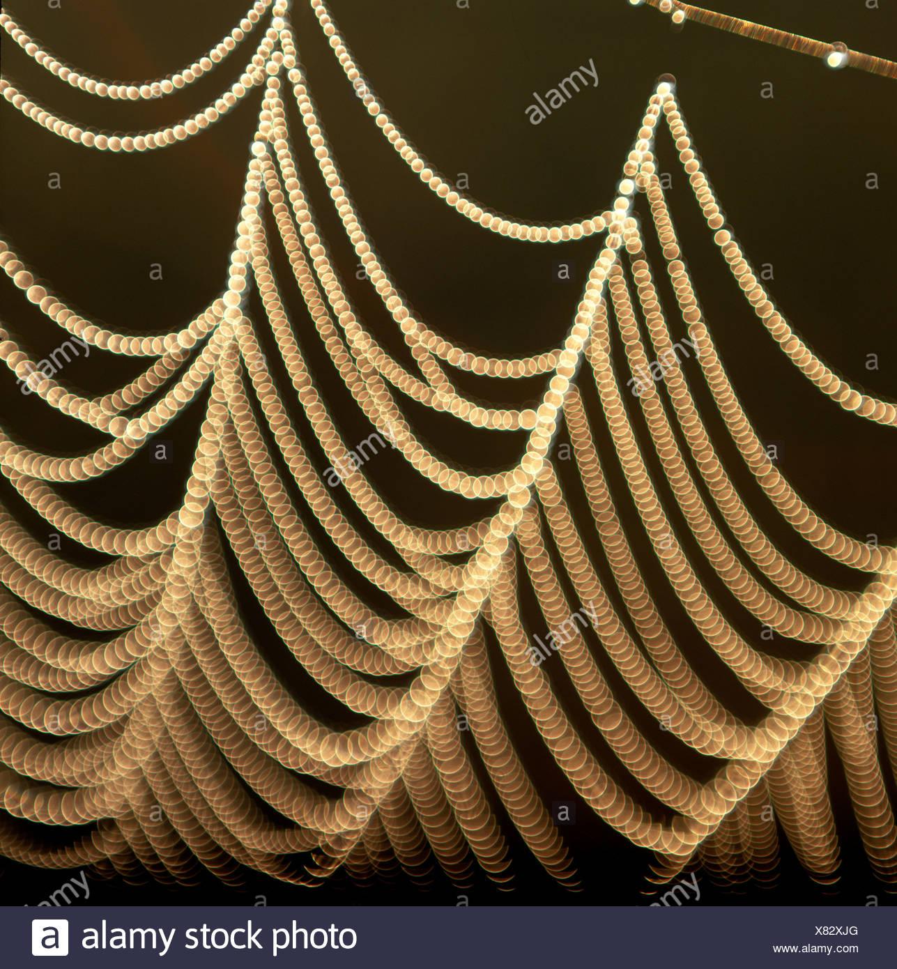 Spinnennetz bedeckt im Tau, Tautropfen Stockbild