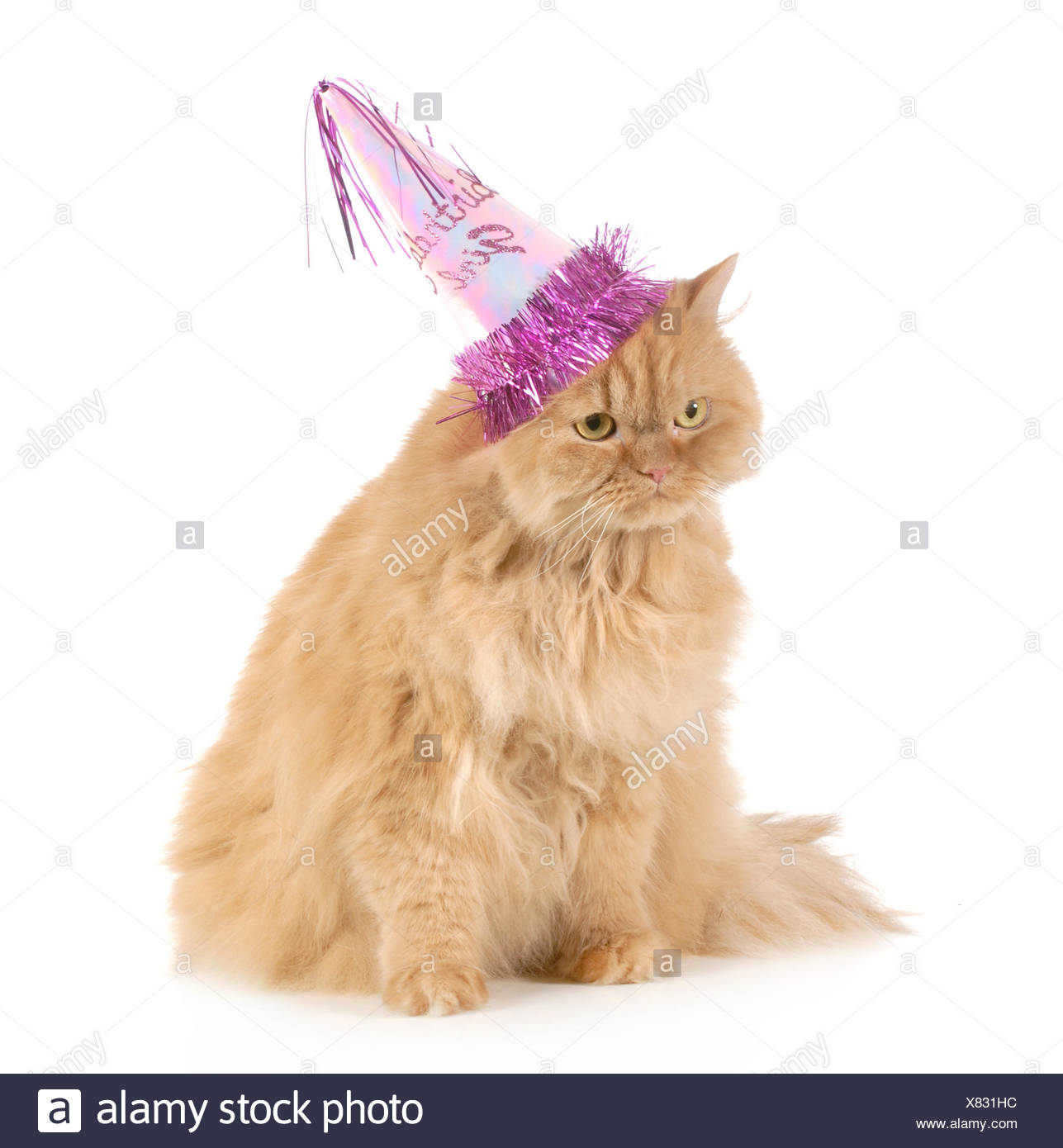 Geburtstag Katze Tragen Partyhut Isoliert Auf Weissem Hintergrund