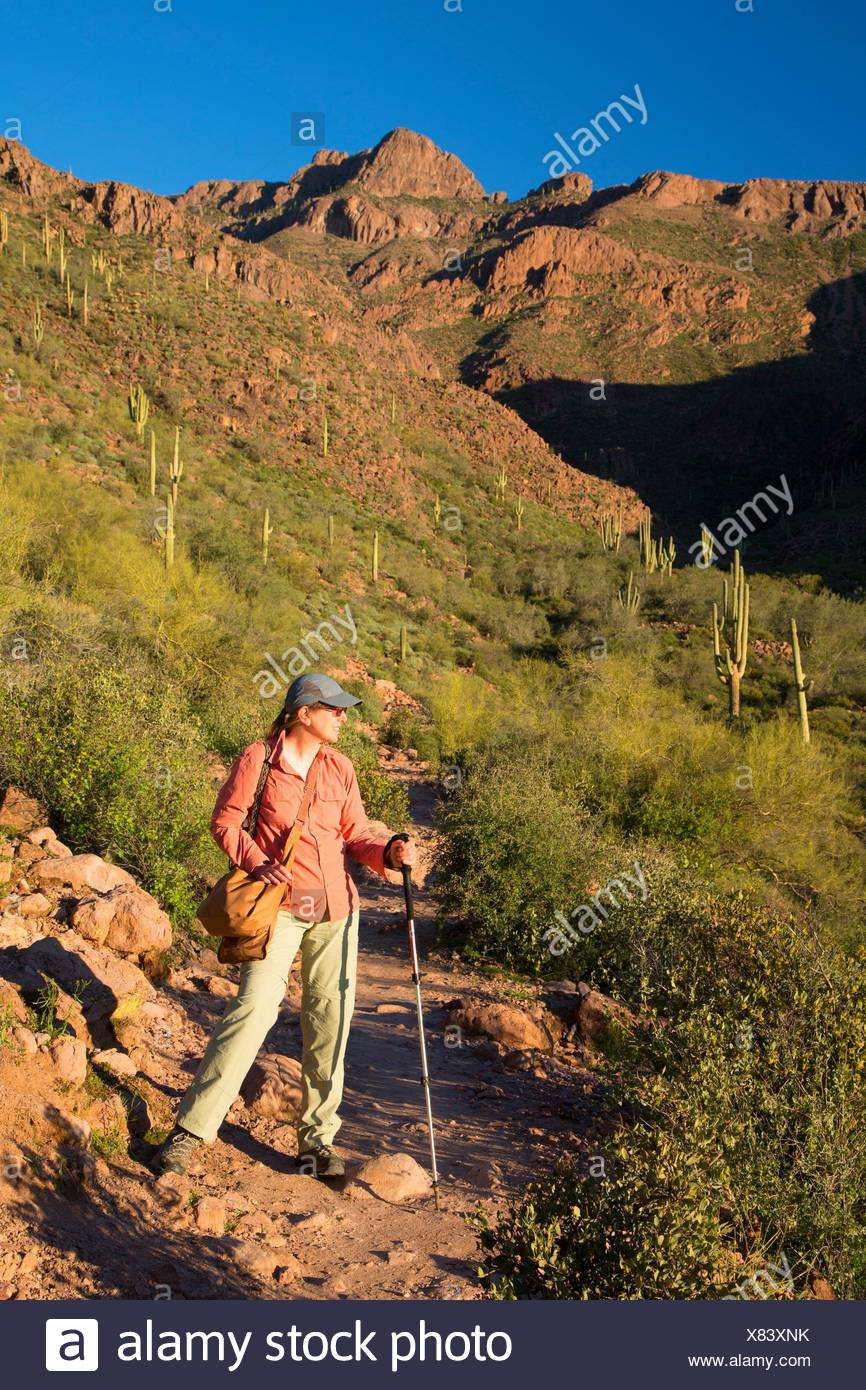 Hieroglyphische Trail, Superstition Wildnis, Tonto National Forest, Arizona. Stockbild