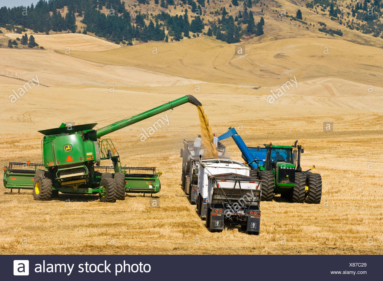 Ein Mähdrescher und Getreide Wagen entladen frisch geernteten weichen weißen Weizen in einen Korn-LKW für den Transport zu einem Getreidesilo / USA. Stockbild