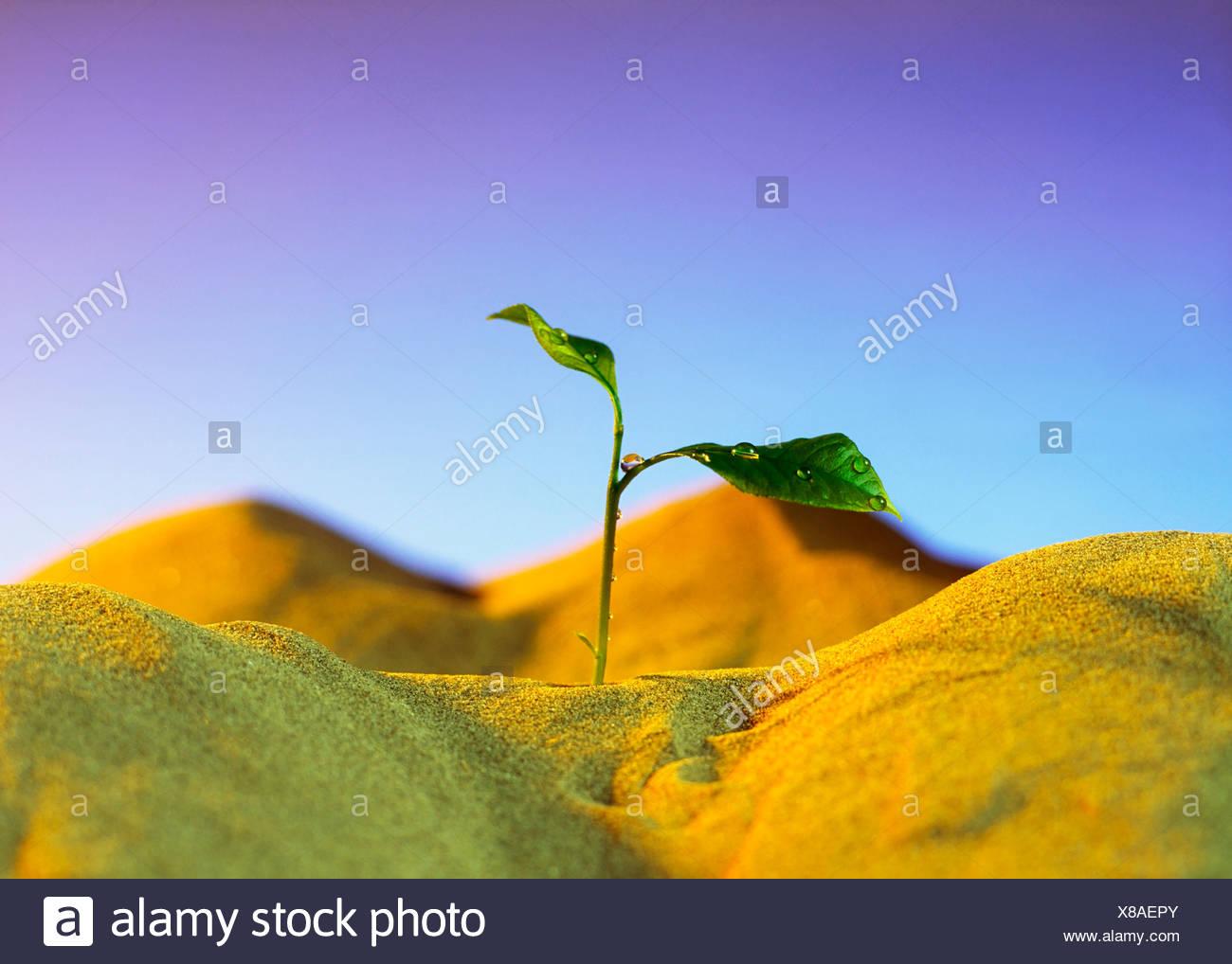 Landwirtschaft, Sämling Stockbild