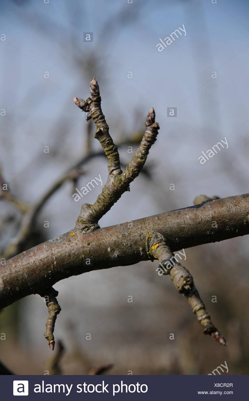 Obstbaum Schneiden obstbaum schneiden stockfotos obstbaum schneiden bilder alamy