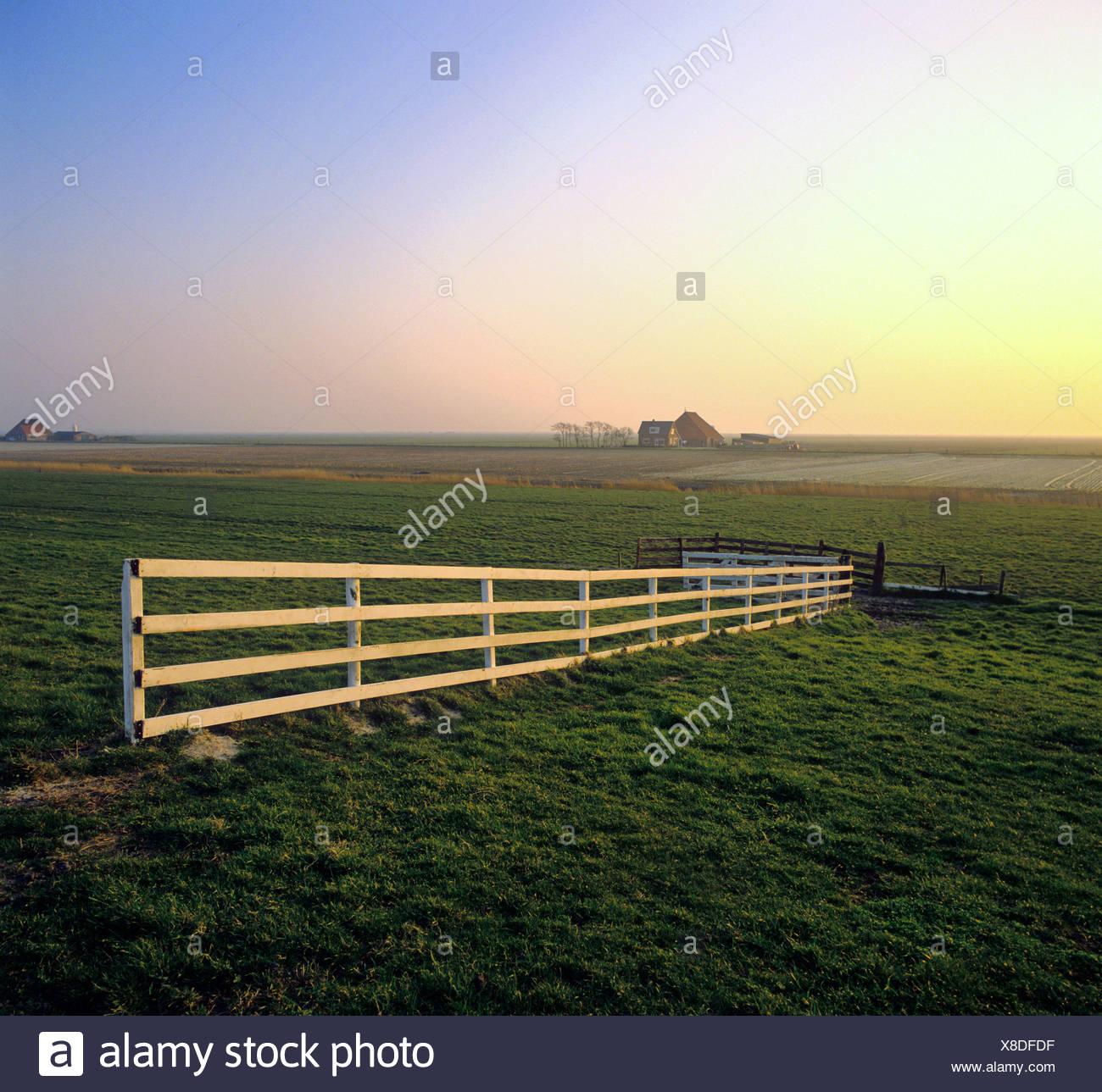 Entzuckend Niederlande, Holland, Europa, Friesland, Zaun, Landschaft, Bauernhof  Stockbild