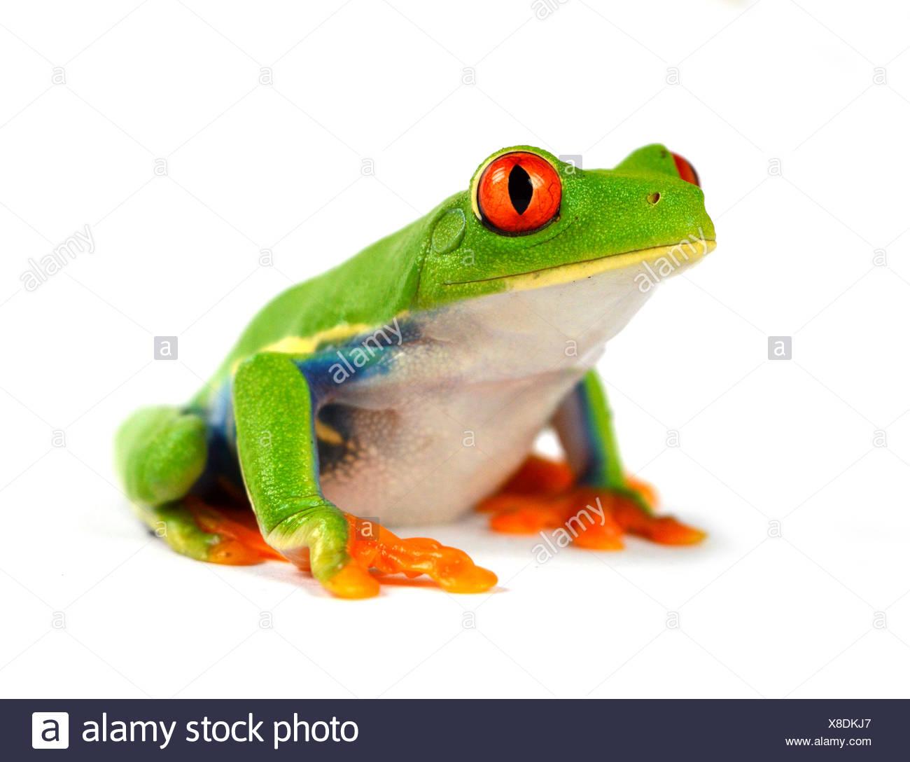 Berühmt Kermit Der Frosch Färbung Seite Fotos - Framing Malvorlagen ...
