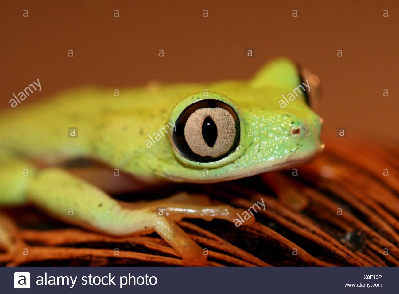 Niedlich Kermit Der Frosch Färbung Seite Zeitgenössisch ...