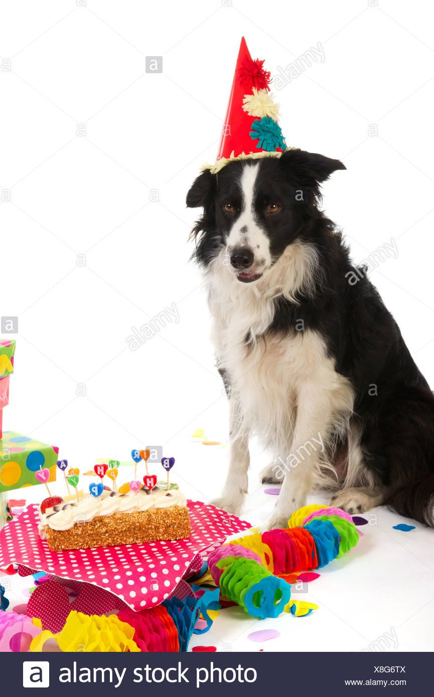 Geburtstag Hund Stockfoto Bild 280639770 Alamy