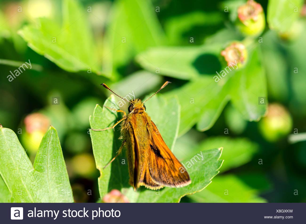 Schön Frühling Schmetterlinge Färbung Seiten Fotos - Druckbare ...