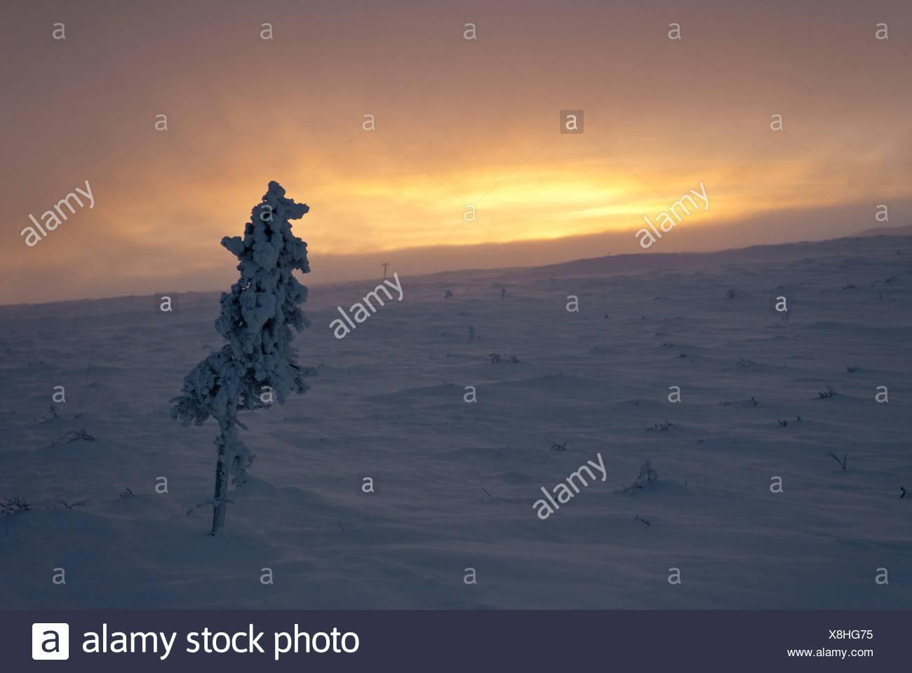 Arktis, Einsamkeit, Europa, Finnland, Fjell, Fjall, Kiilopaa, kalt, Lappland, Licht, Melancholie, Morgen, Morgendämmerung, Morgengrauen, Roter Himmel, Stockbild