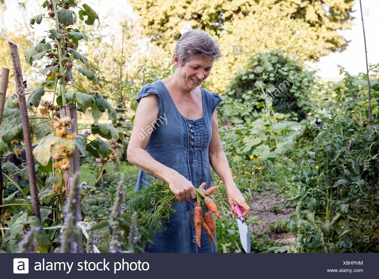 Reife Frau, Gartenarbeit, umgraben frischen Karotten Stockbild