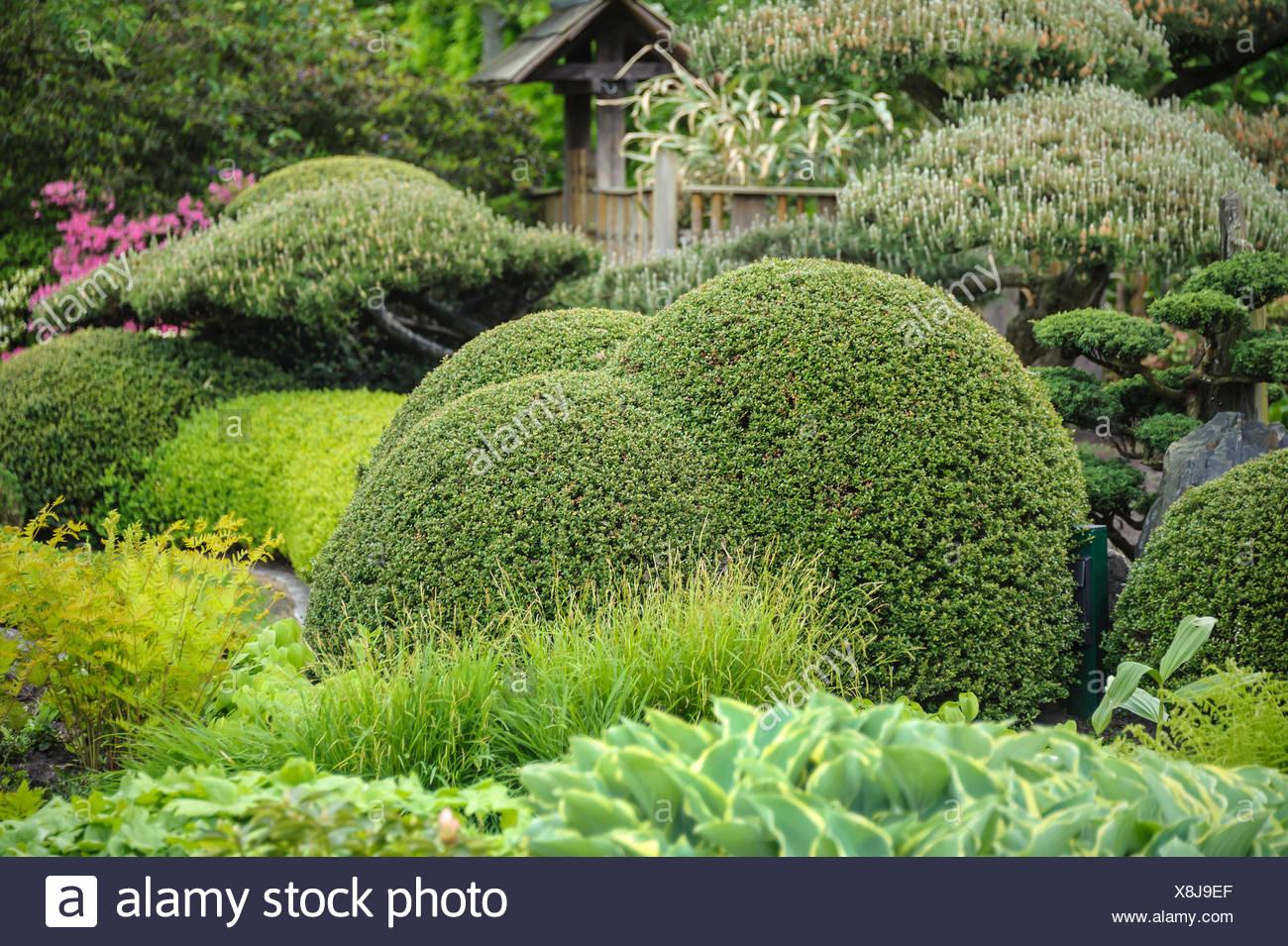 Holly bush in garden stockfotos holly bush in garden - Japanische garten deutschland ...