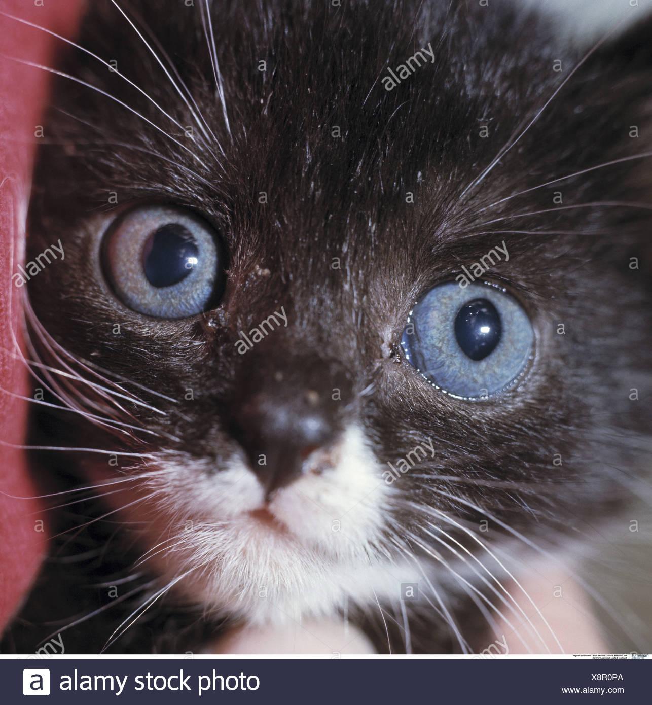 Katze Junge Portrat Tier Saugetier Haustier Hauskatze Junge Schwarz