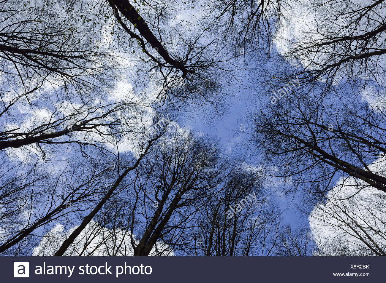 broad leaved trees stockfotos broad leaved trees bilder alamy. Black Bedroom Furniture Sets. Home Design Ideas