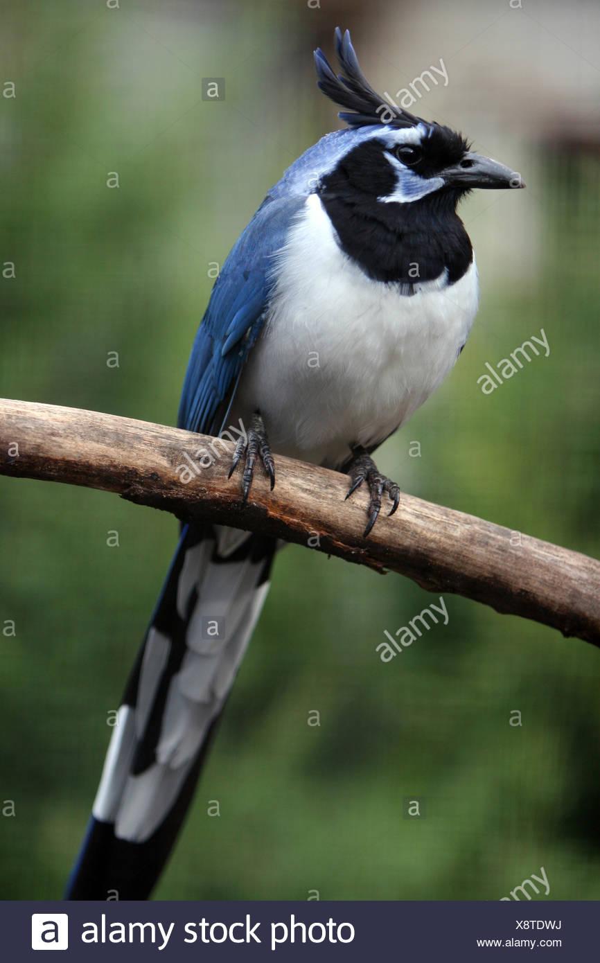 Ziemlich Blaue Vogel Färbung Seite Galerie - Druckbare Malvorlagen ...