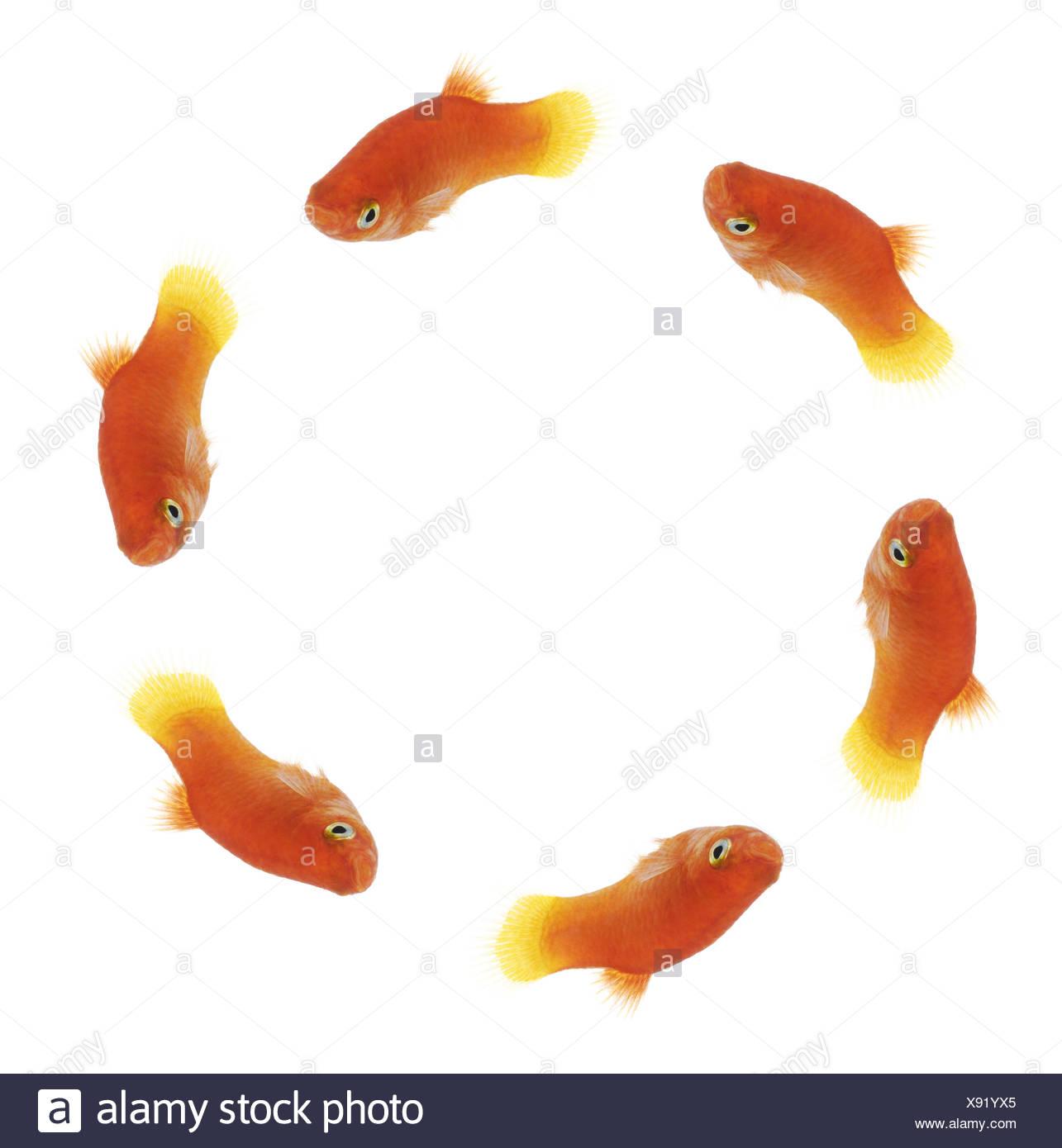 Berühmt Fische Färben Druckbare Seiten Ideen - Entry Level Resume ...