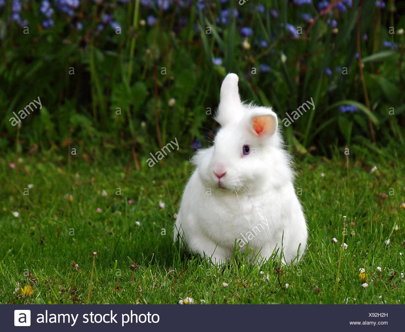 Haustier Nagetier Kaninchen Hase Osterhase Kleine Tiere Wiese Grüne
