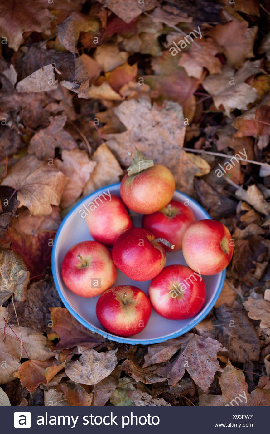 Direkt oben geschossen Schüssel voller Äpfel Stockbild