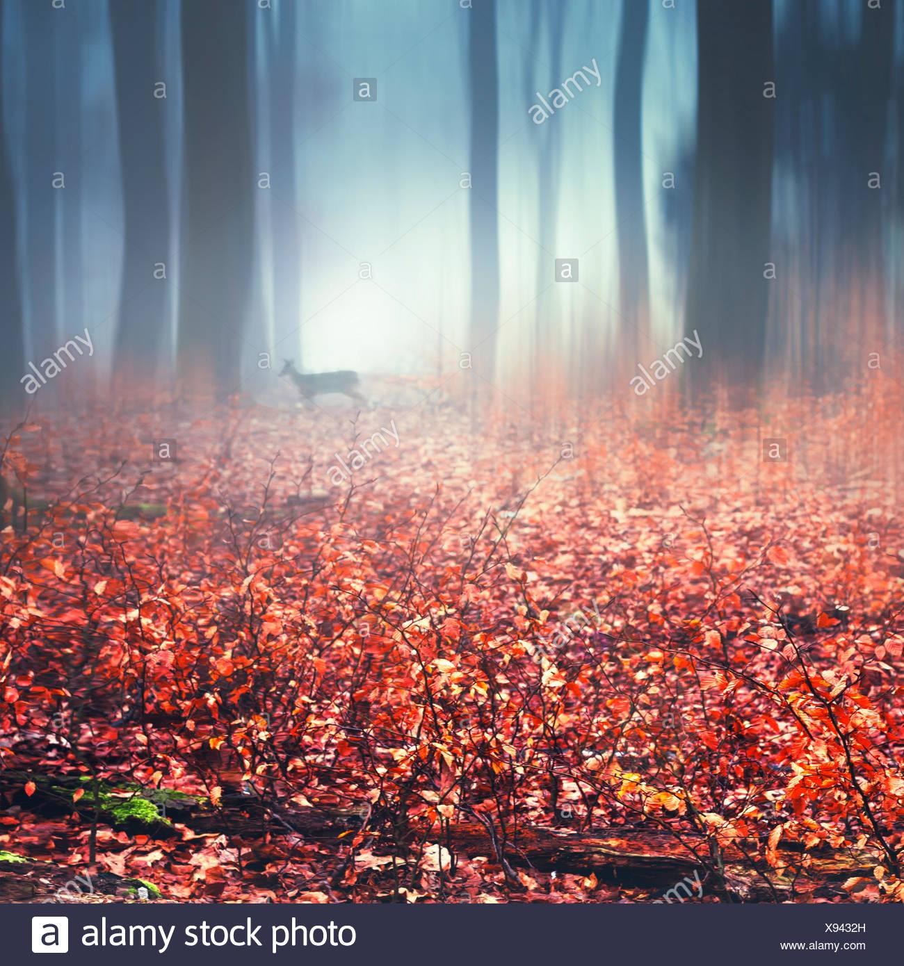 Nebligen Herbstwald, nasses Herbstlaub und Hirsch, digital manipuliert Stockbild