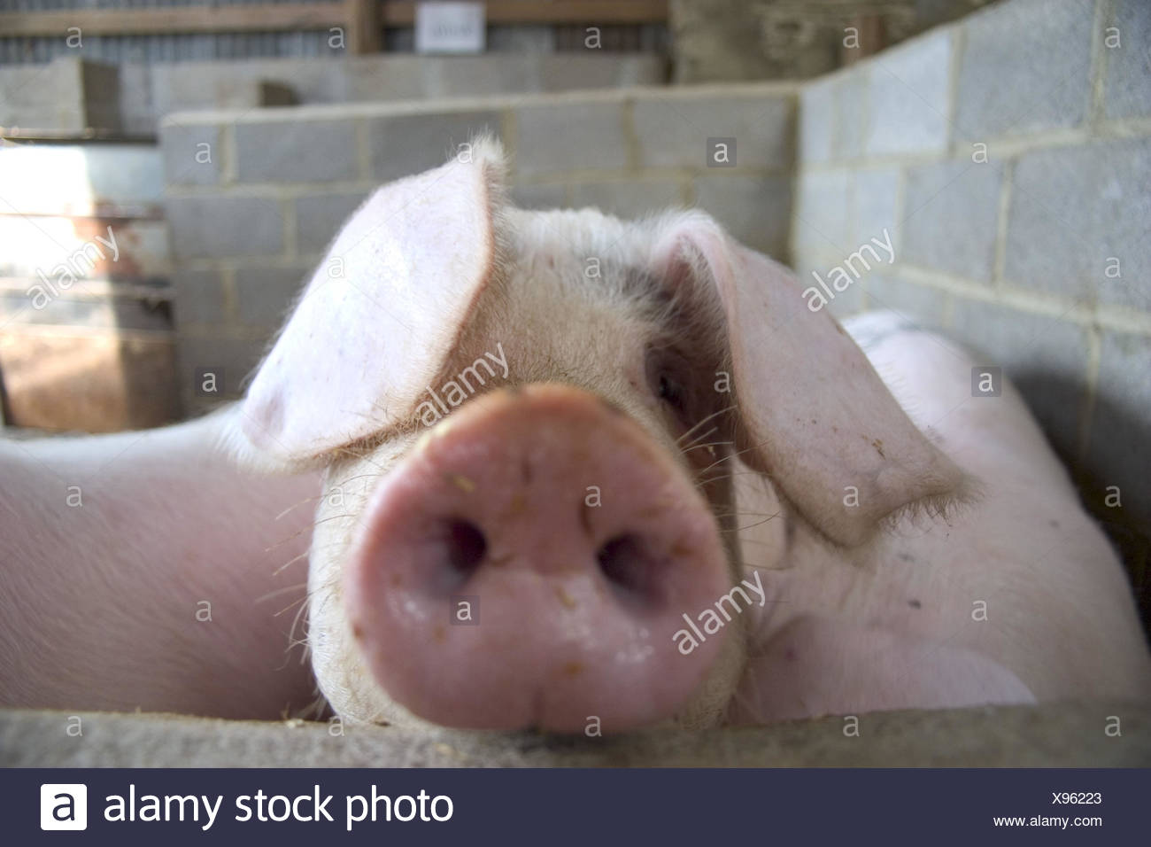 Großzügig Schwein Draht Schneiden Fotos - Schaltplan Serie Circuit ...