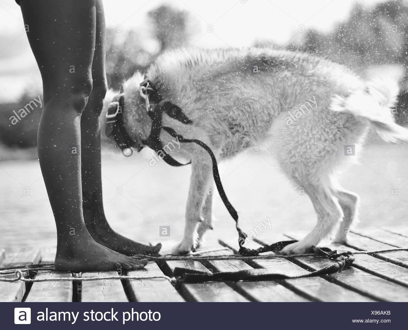 Hund schütteln auf Pier Stockbild