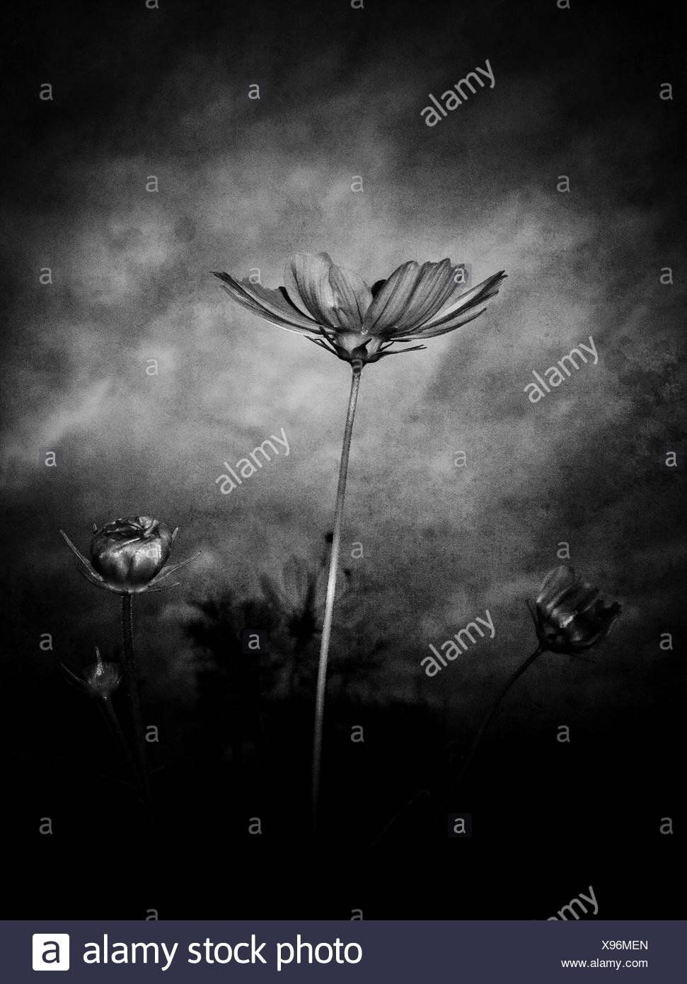 Blühende Pflanzen wachsen auf Feld Stockbild
