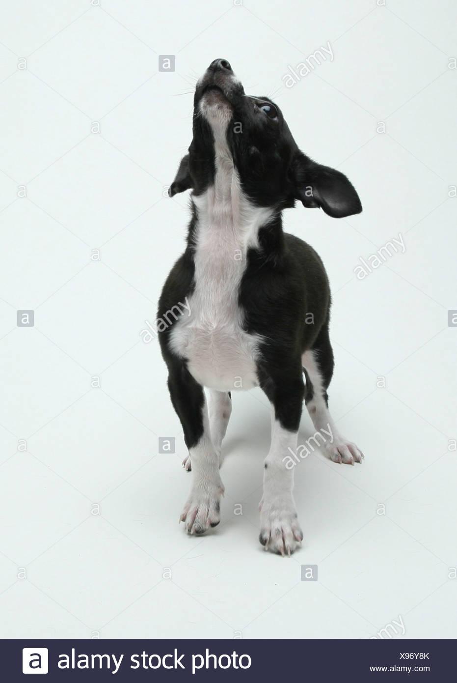 Ausgezeichnet Baby Bulldog Färbung Seiten Galerie - Entry Level ...