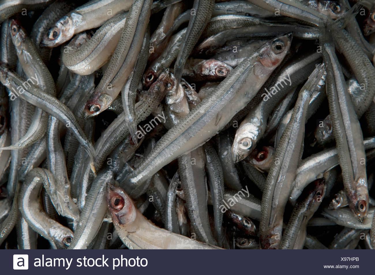 Nahaufnahme von einem Haufen von rohe Sardinen Stockbild