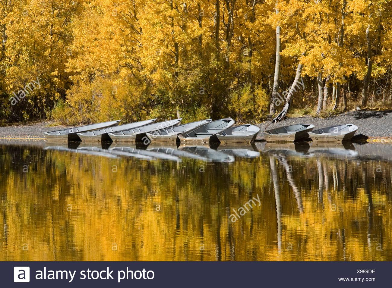 Eine Reihe von Fischerbooten und Herbst Espen Bäumen reflektiert in Silver Lake in der Sierra Mountains, Kalifornien und Umgebung: Stockbild