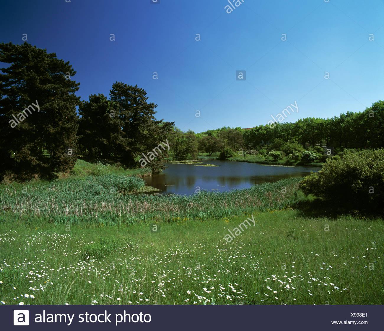 Landschaft-Landschaft Berlin-Dahlem Park Blume Wiese Wiesen Idylle Teich Teich See Botanischer Garten Deutschland E Stockbild
