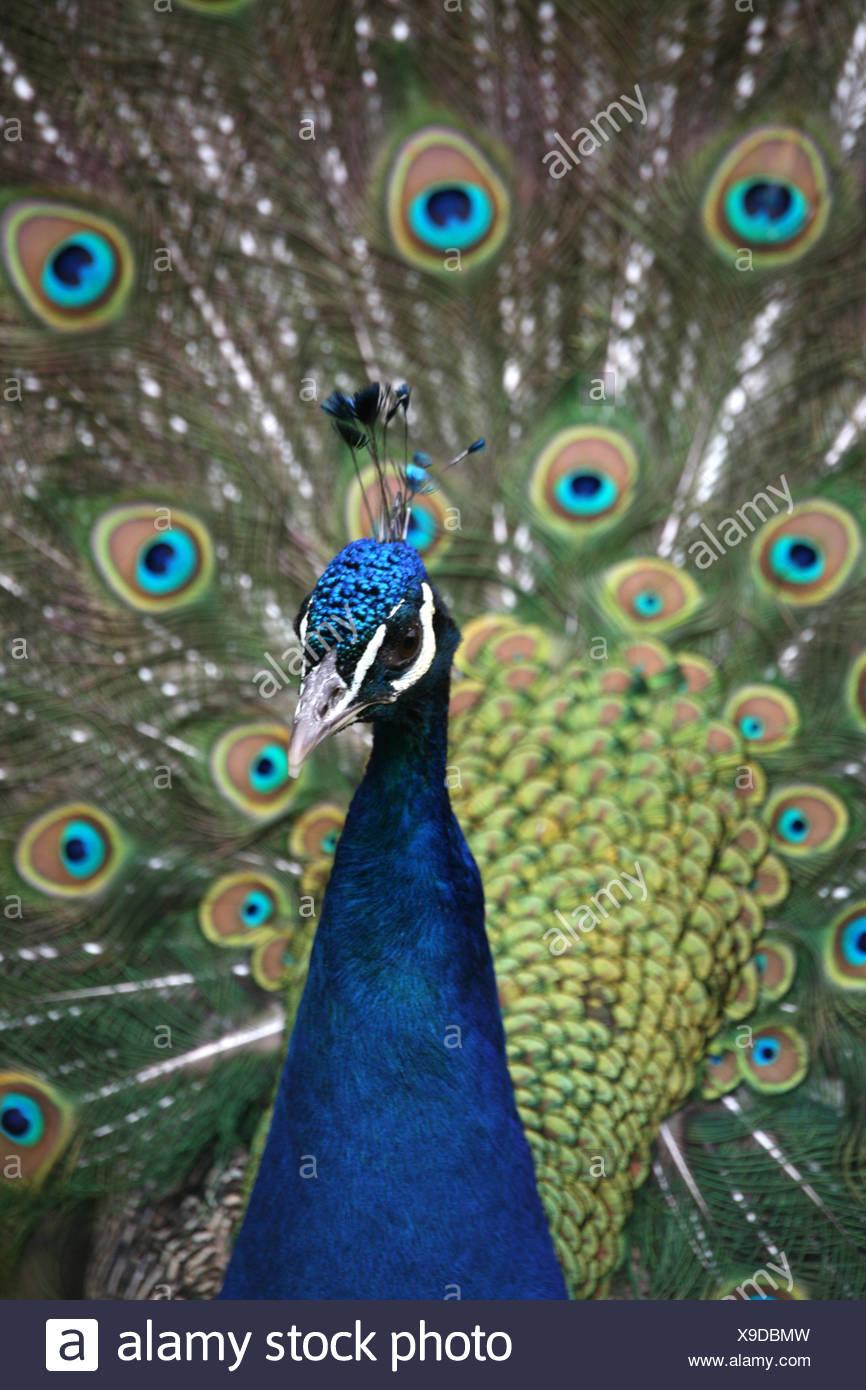 schön vögeln