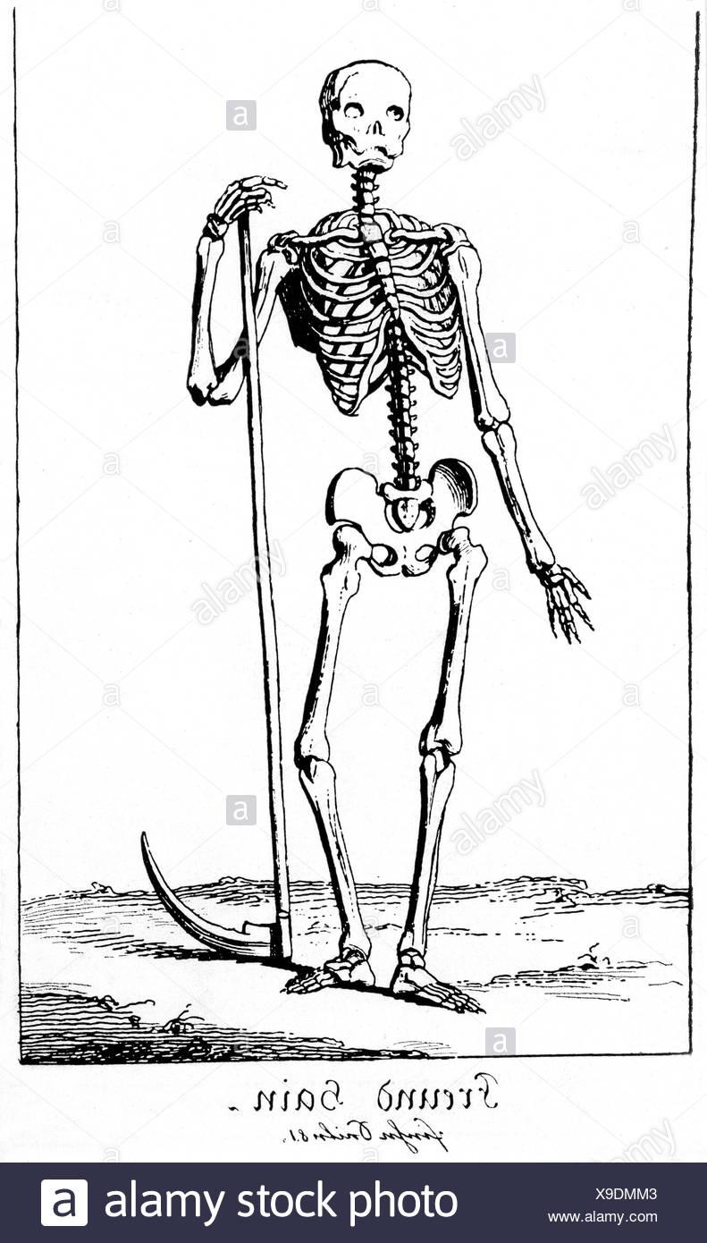 Charmant Menschliche Anatomie Kadaver Fotos - Anatomie Von ...