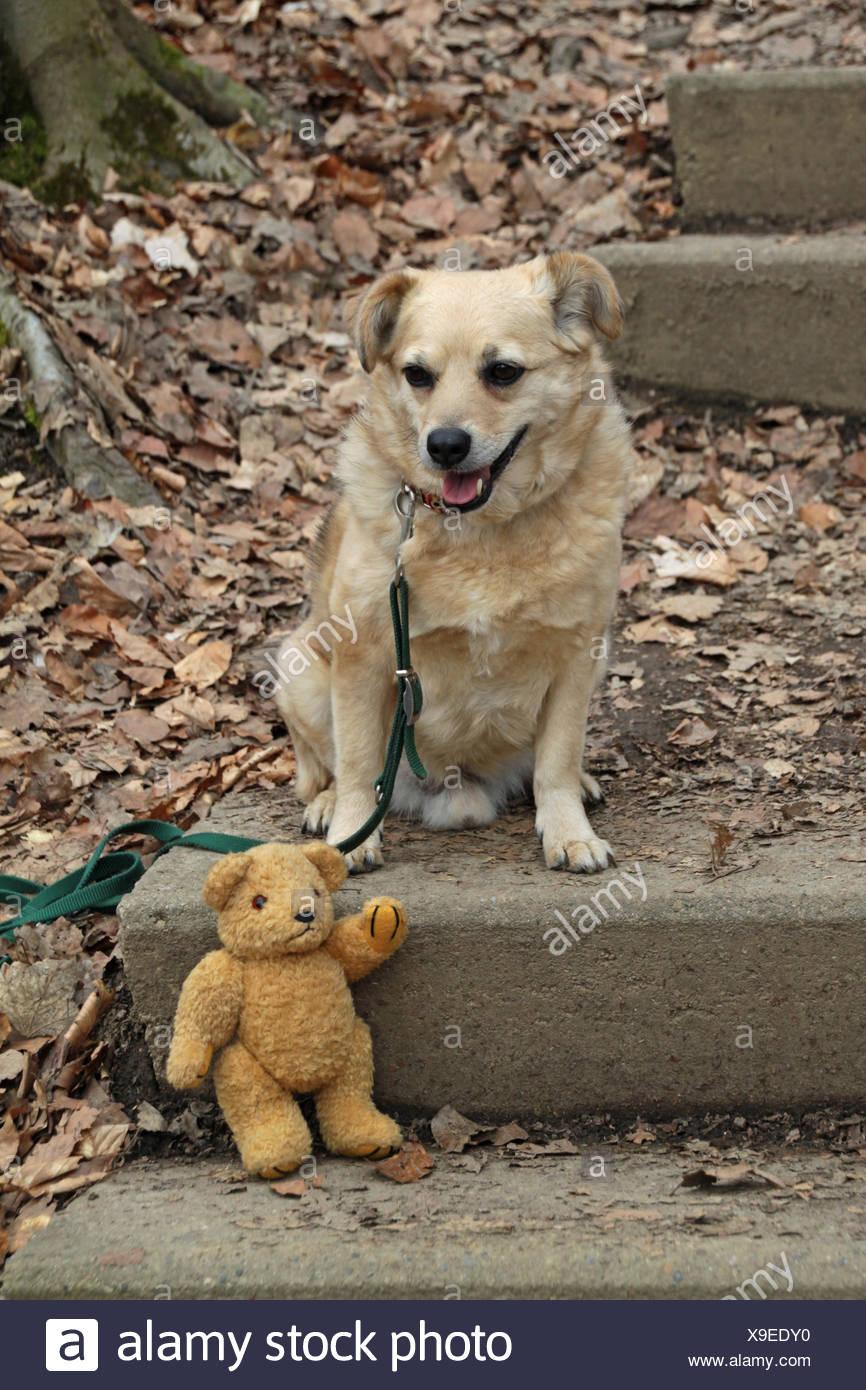 Wanderweg Zum Hohenstein Mit Teddy Bär Und Hund Stockfoto Bild