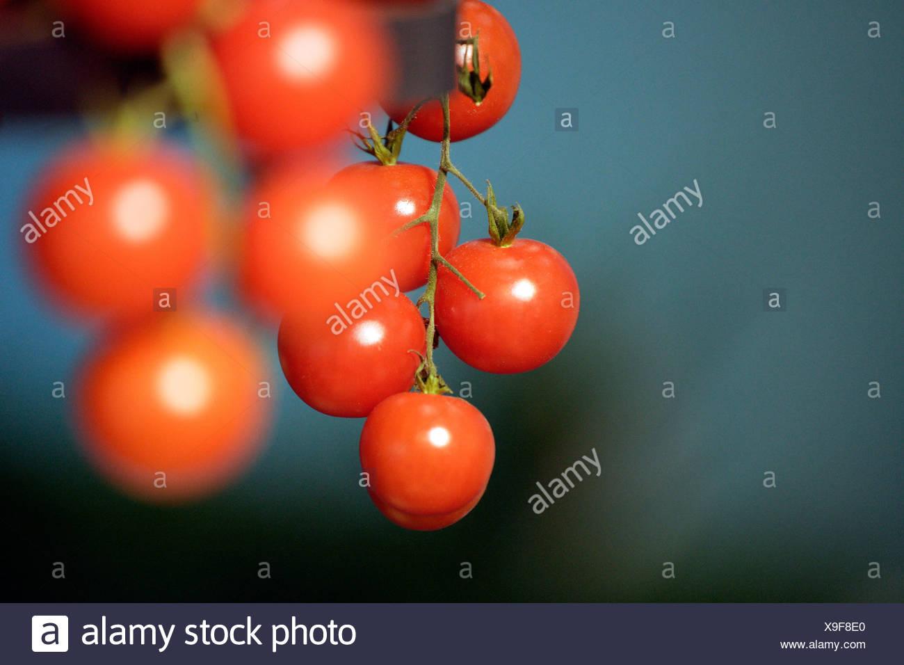 Berlin, Tomaten Stockbild