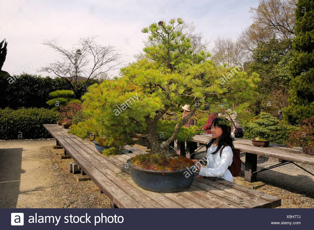 Japanische Mädchen Bestaunen Bonsai Baum Im Botanischen Garten In