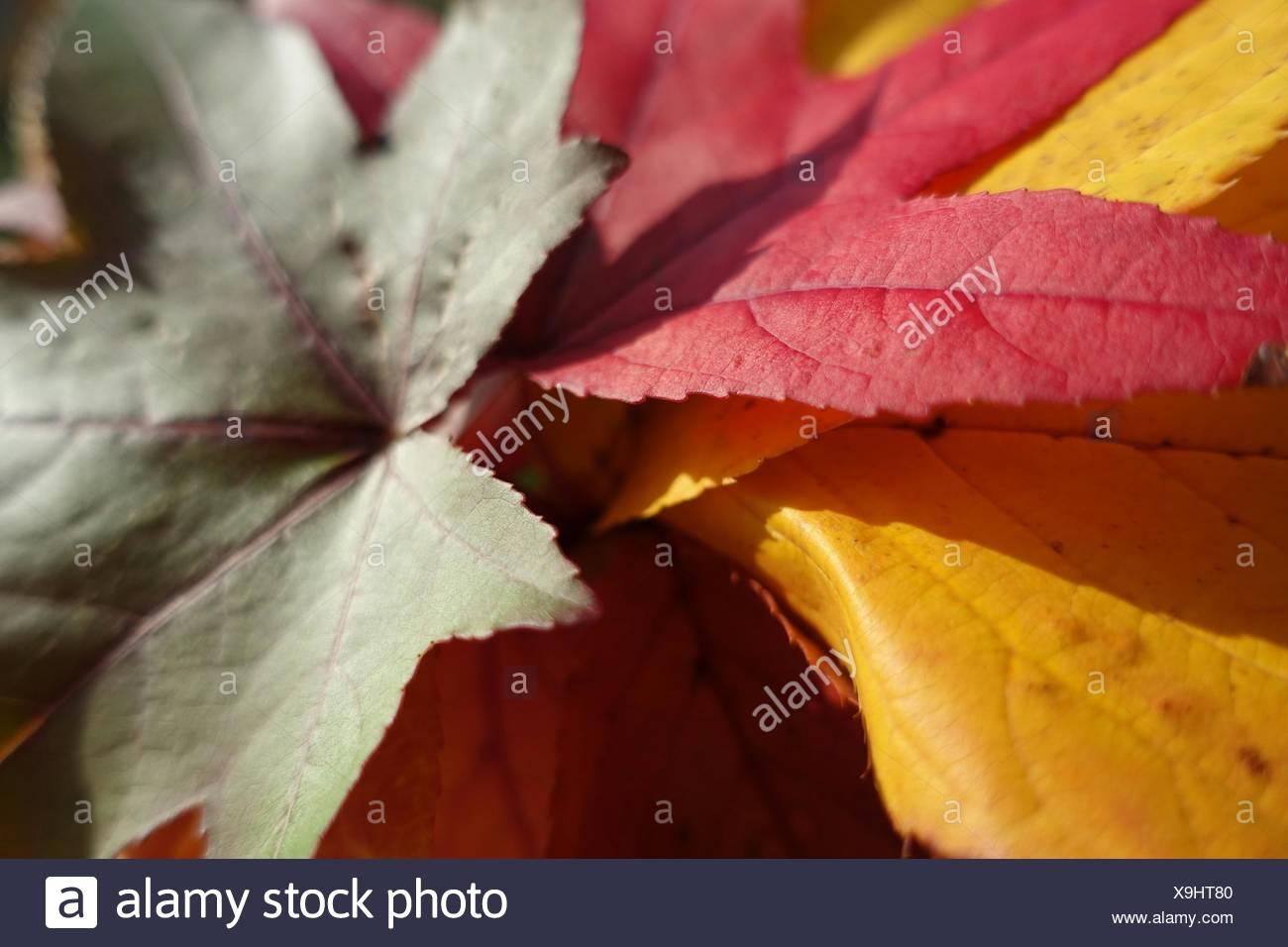 Nahaufnahme von Laub im Herbst Stockbild