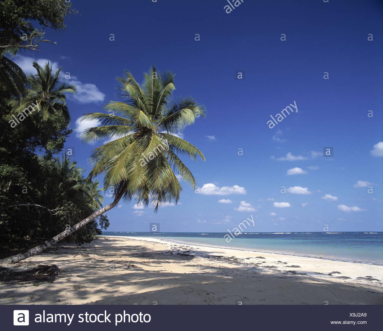 Dominikanische Republik Karibik Lesung Terrenas Meer Palmen Palmen