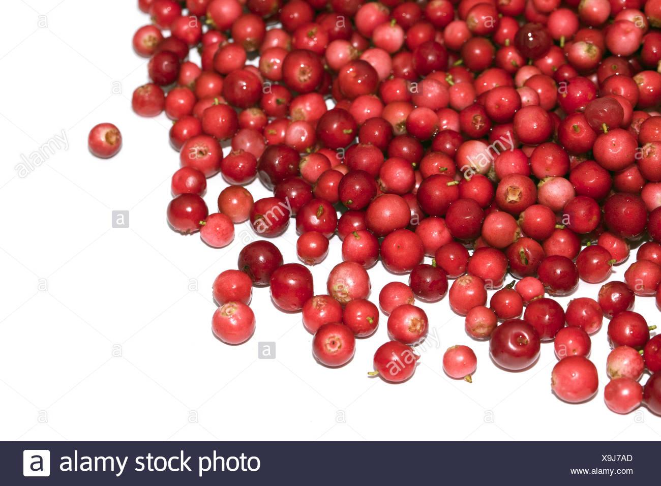 Haufen von cranberry Stockbild