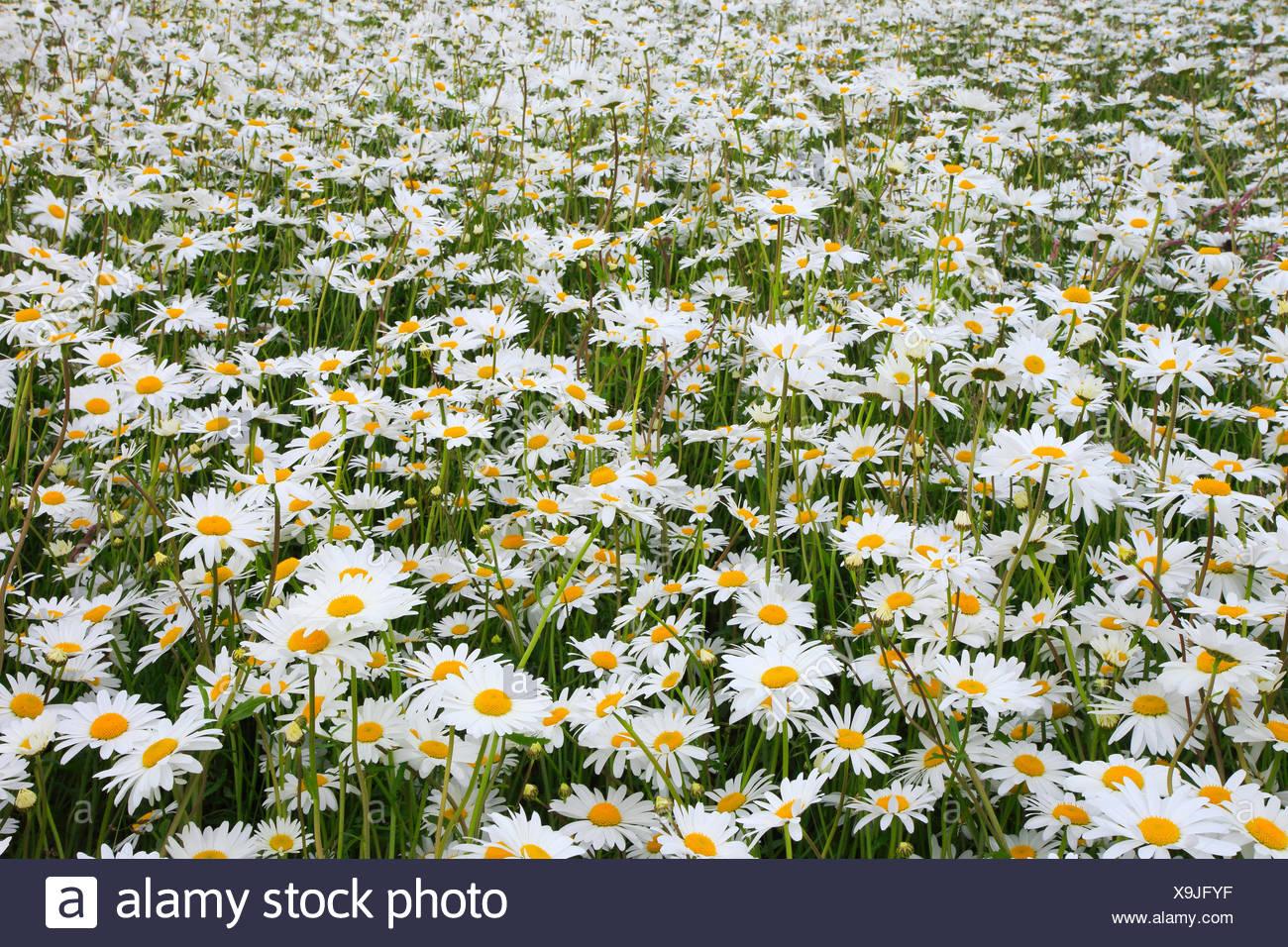 Carpets Of White Stockfotos & Carpets Of White Bilder - Seite 4 - Alamy