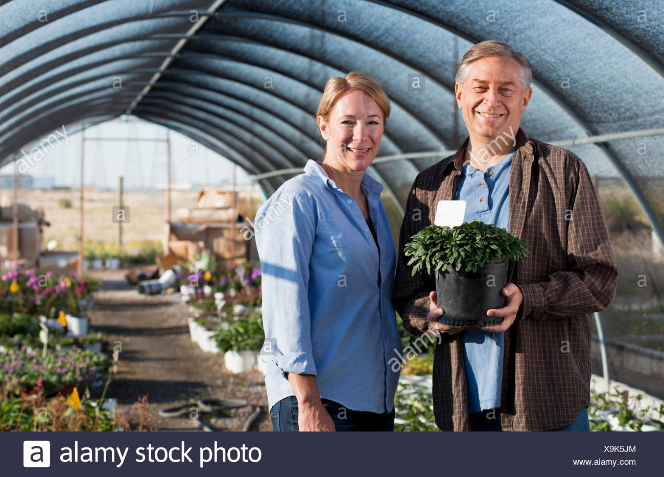 Reife männliche Topfpflanze