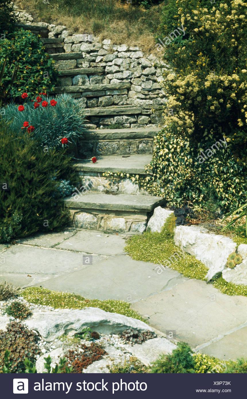 Steile Steintreppe Mit Niedrigen Pflanzen Von Rosen Efeu Und