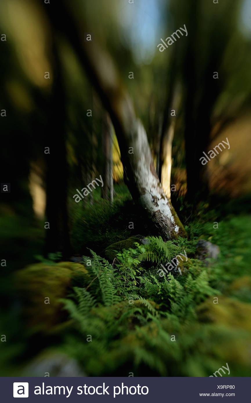 Vegetation in Holz gleiten Stockbild